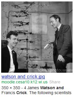 watson crick  dna