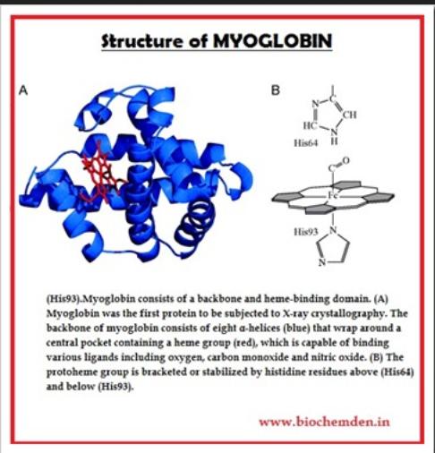 myoglobin   9